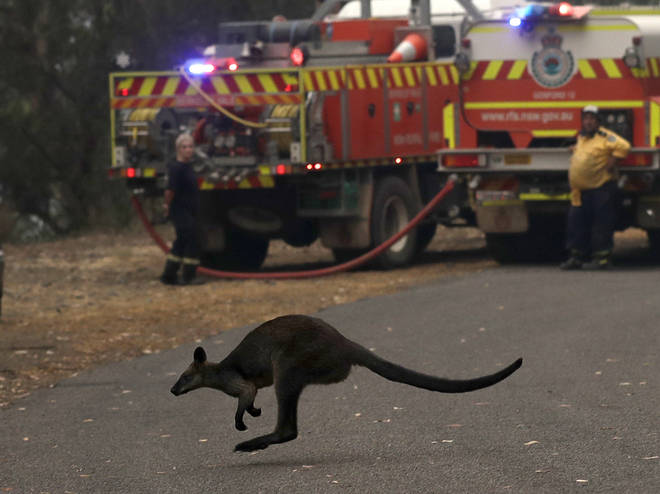 The fire services have been stretched across New South Wales