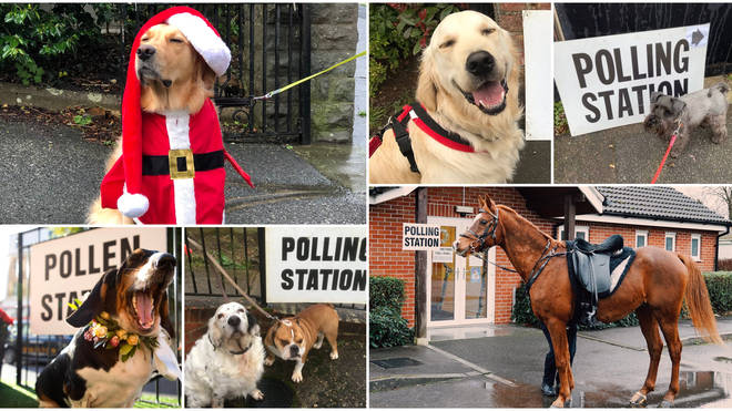 The most important part of any election - dogs