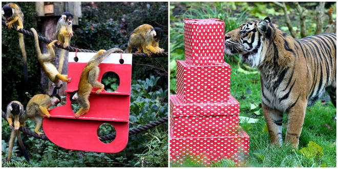 Christmas has come early for London Zoo animals