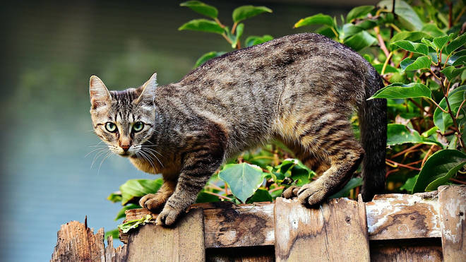 File photo: 16 cats were attacked, nine of which died