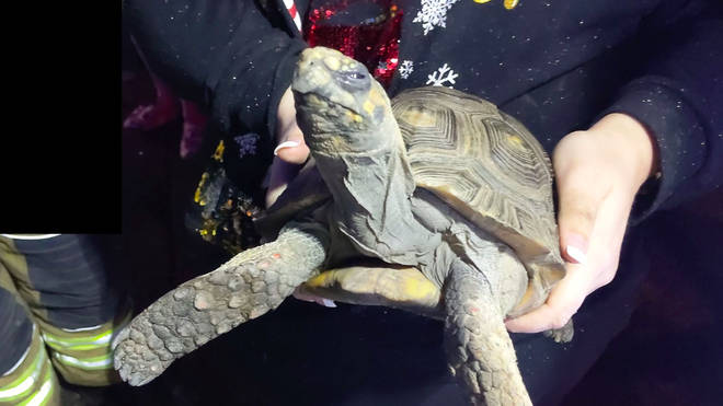 The tortoise was rescued after it started a fire in a house
