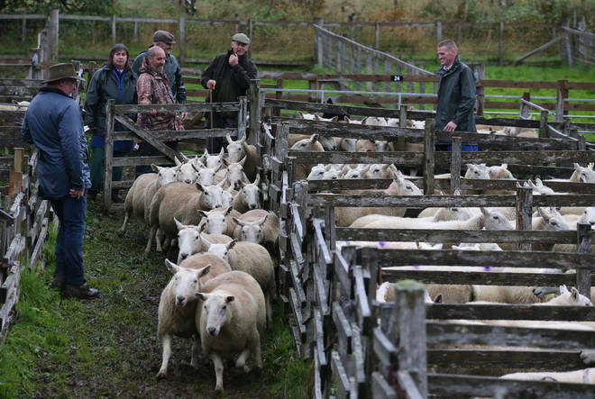 Farmers will be given extra funding ahead of Brexit