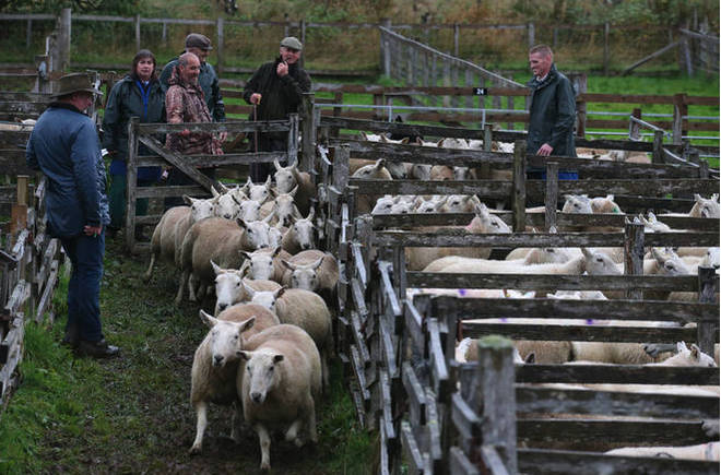 Farmers will be given extra funding ahead of Brexit.