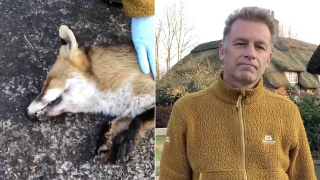 Chris Packham told Ian Payne about the dead fox protest