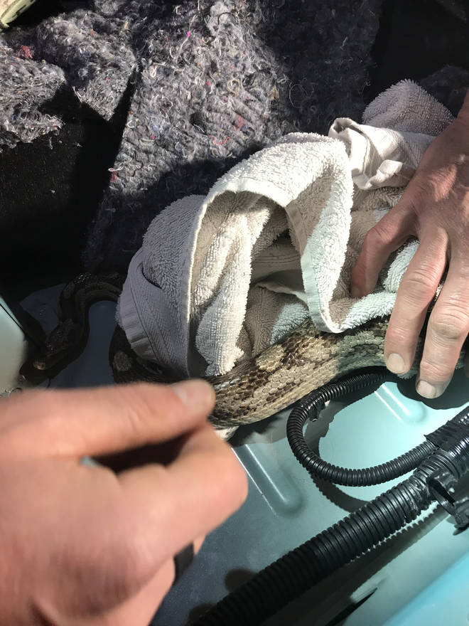 He managed to slither into the gearbox of the car
