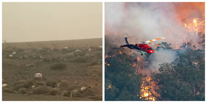 The wildfires have been raging across Australia since September