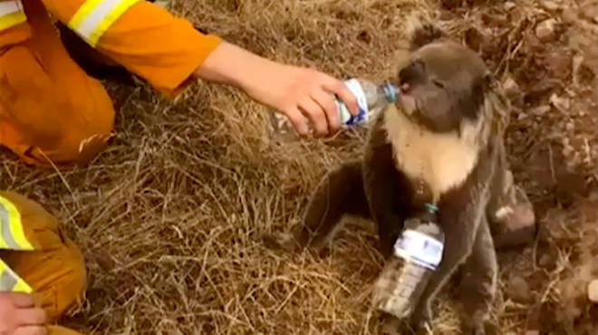 Firefighters have been desperately trying to save the animals