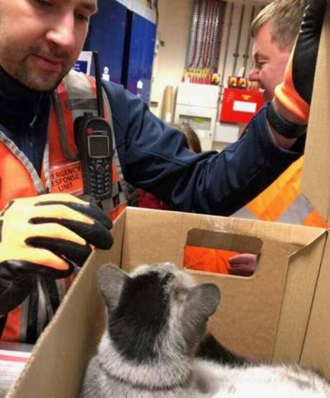He was rescued by workers at Tufnell Park