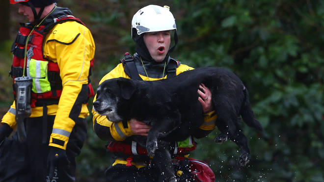 One rescuers makes sure a Labrador gets out of the floodwater safely