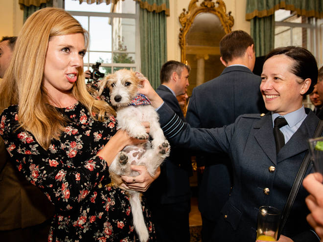 Jack Russells, like Boris Johnson's dog Dilyn, also saw a spike