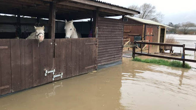 Horses has to be rescued after being trapped by floodwater