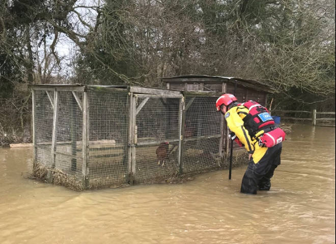 Chickens were rescued in Ashford