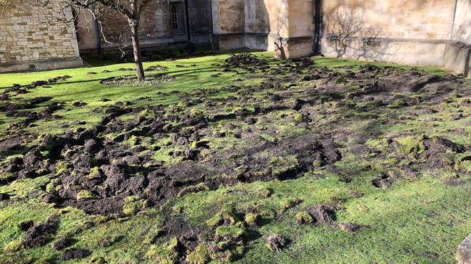 The lawn at Trinity College was torn up on Monday