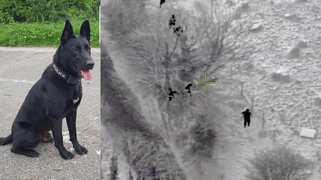 Police Dog Bobby helped to catch one of the burglars while two more hid in a tree