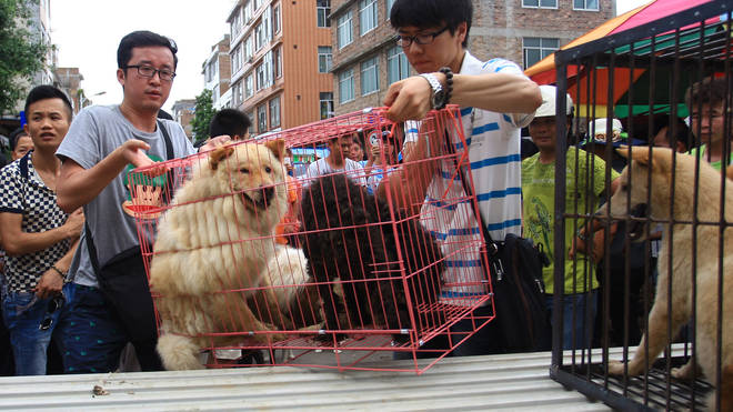 Shenzhen's government has proposed a ban on dog and cat meat