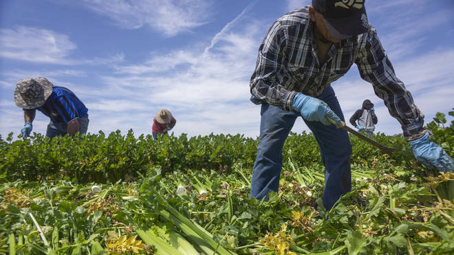 Farm workers are one of the categories people believe are skilled labour