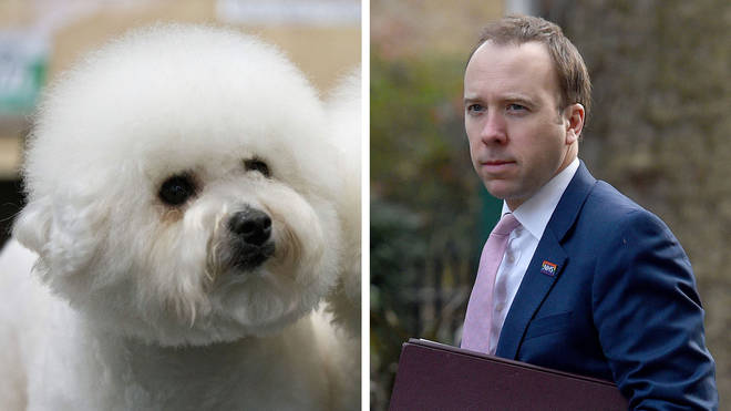 Matt Hancock insists Crufts should go ahead