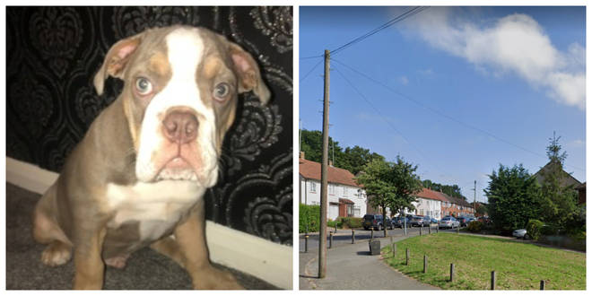 Spot the puppy was stolen in Orpington