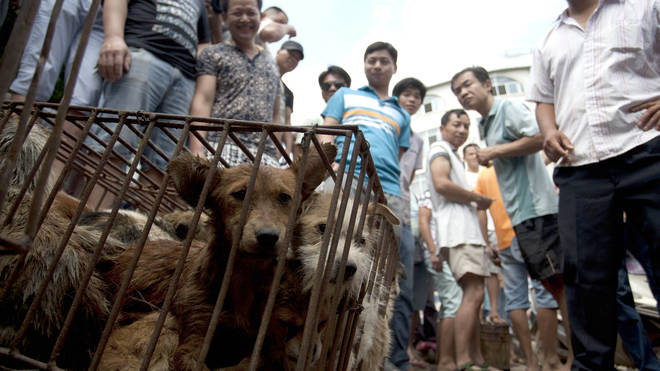 Dog Meat Festival preparations in Yulin, China - June 2015