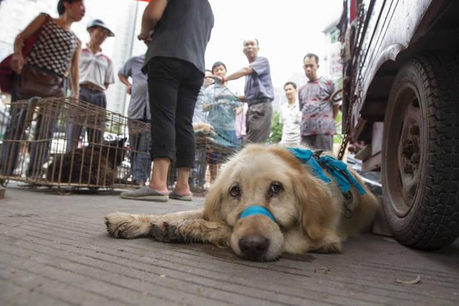 Dog Meat Festival in China - June 2014
