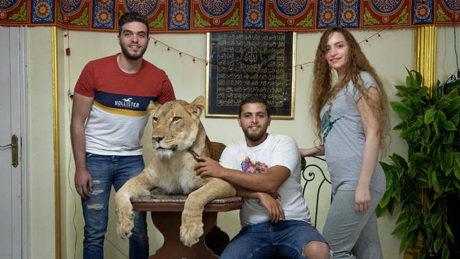 Ashraf el-Helw (second-right) with five-year-old African lion Joumana