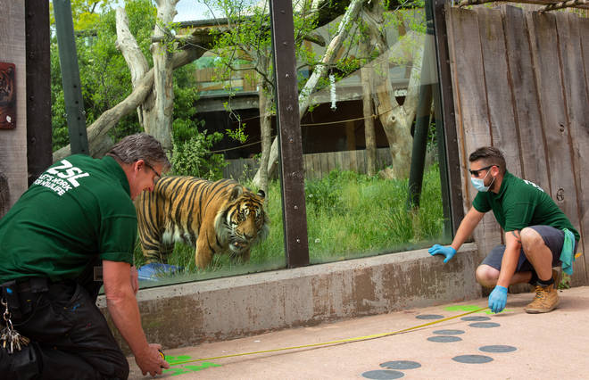 Eddie Donovan and Jamie Turner measure 2m distance at London Zoo