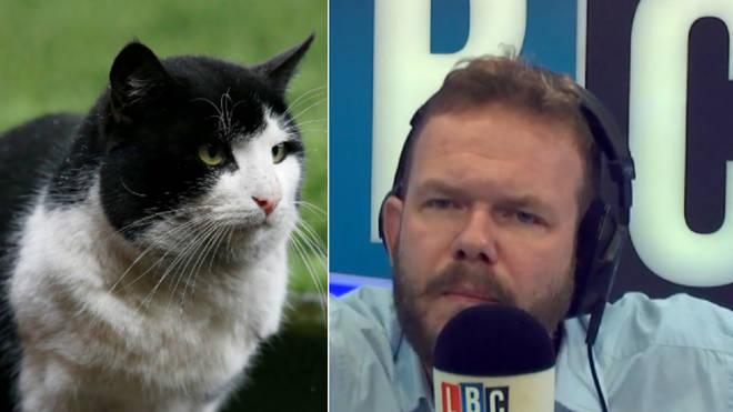 James O'Brien responded wonderfully to people who criticised a caller for having a cat whilst on benefits