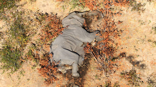 More than 350 elephant carcasses have been spotted in the Okavango Delta