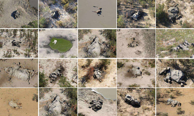Aerial footage showed elephant carcasses scattered across the Okavango Delta