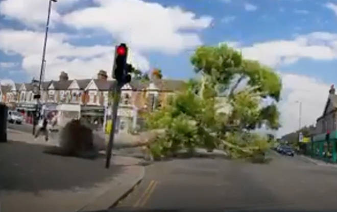 The tumbling tree narrowly missed two passers-by