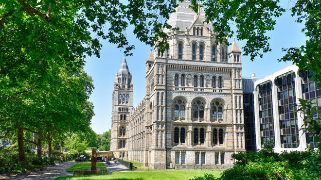The Natural History Museum will reopen in August