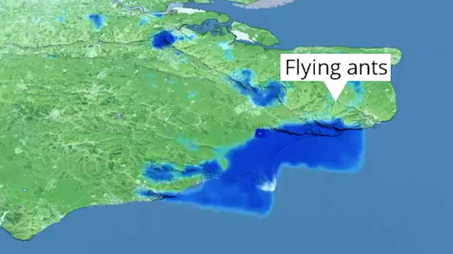 The blue spots over the south coast are not patches of rain but in fact flying ants