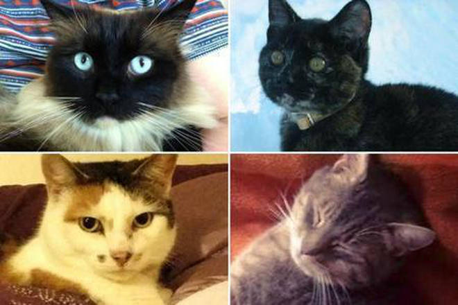 "Victims of the ""Croydon Cat Killer"""