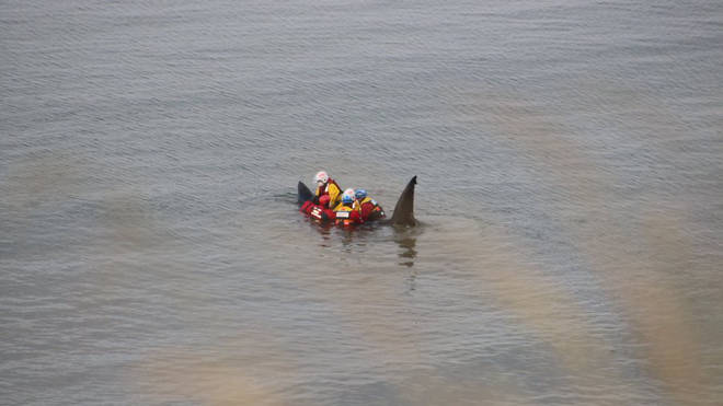 The basking shark was stranded at Filey Beach, North Yorkshire