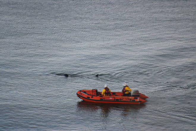 RNLI crews joined the efforts to save the creature before it was put down