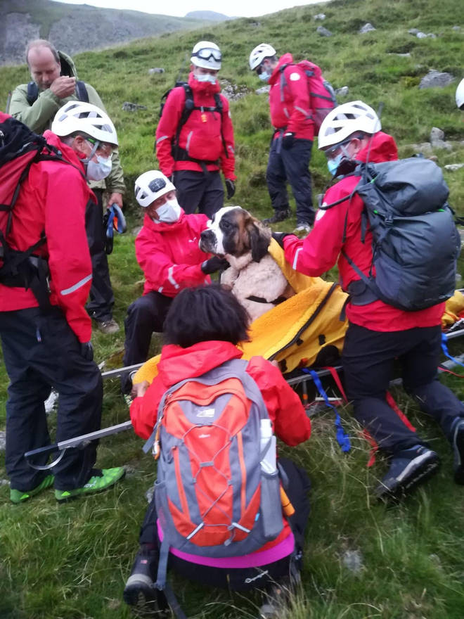 Sixteen volunteers from Wasdale Mountain Rescue Team spent nearly five hours rescuing Daisy