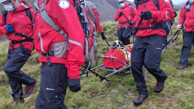 Members of Wasdale Mountain Rescue Team rescuing Daisy the St Bernard