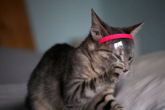 A cat in Argentina wears a mini-mask to protect it from coronavirus