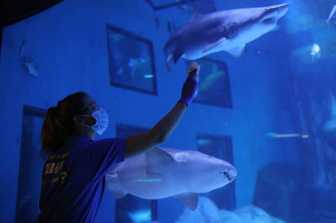 Strict hygiene measures will be in force at London's SEA LIFE aquarium