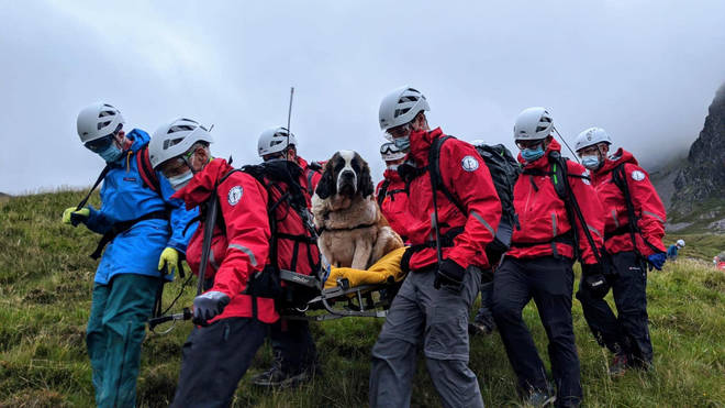 Wasdale Mountain Rescue Team rescuing a St Bernard dog from Scafell Pike, Lake District