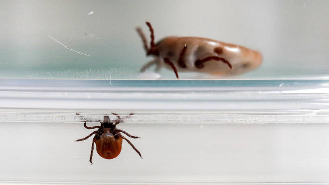 Babesiosis is caused by a parasite which infects red blood cells