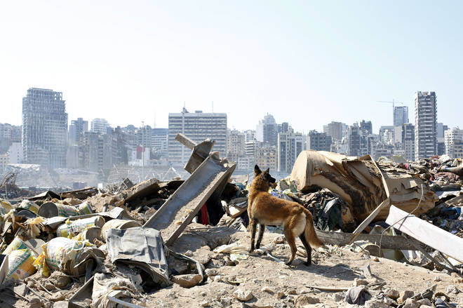 Rescue dogs are searching the rubble in Beirut