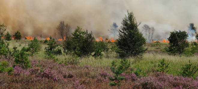 The fire tore through Chobham Common on Friday