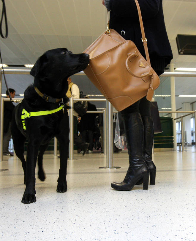 It is hoped that if the trial is successful the dogs can be used at UK airports to screen people arriving from abroad