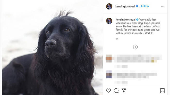 The nine-year-old black cocker spaniel was a wedding present from Kate's brother James