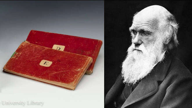 Two of Charles Darwin's notepads have been reported stolen two decades after going missing