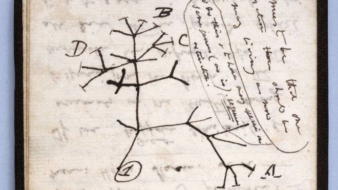 One of the notebooks contained Darwin's seminal 1837 Tree of Life sketch