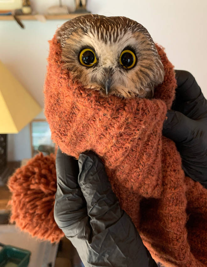 Rocky the owl