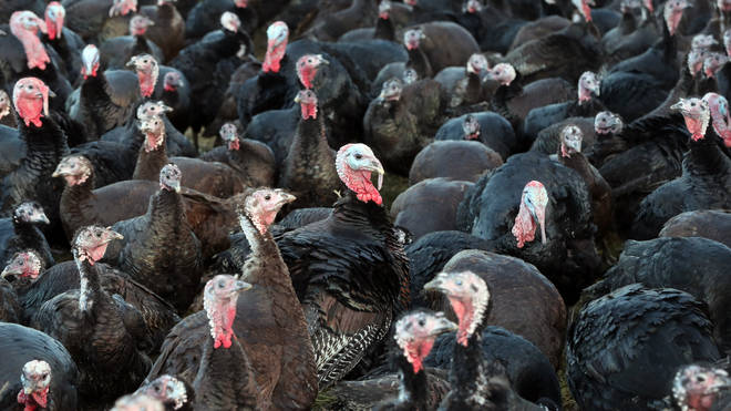 Over 10,000 turkeys will be culled at a farm in North Yorkshire after an outbreak of bird flu has been confirmed