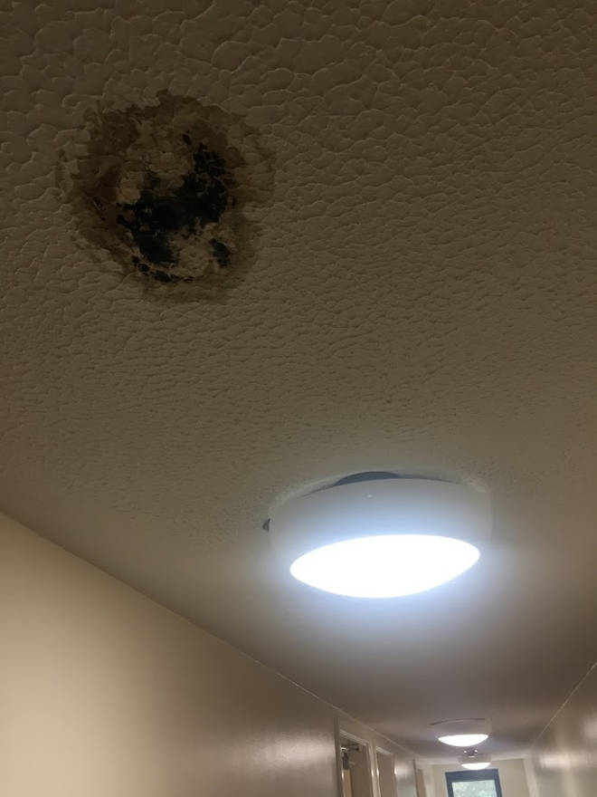 One Sussex student told LBC they felt they had to move out due to mould in their accomodation.